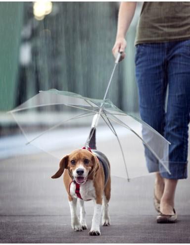 Guarda-Chuva para Cachorro Transparente